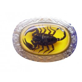 Real Scorpion Belt Buckles
